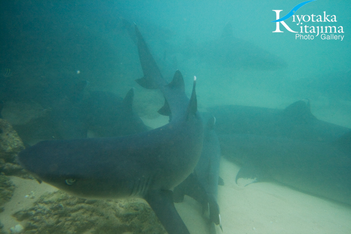 サメに遭遇!