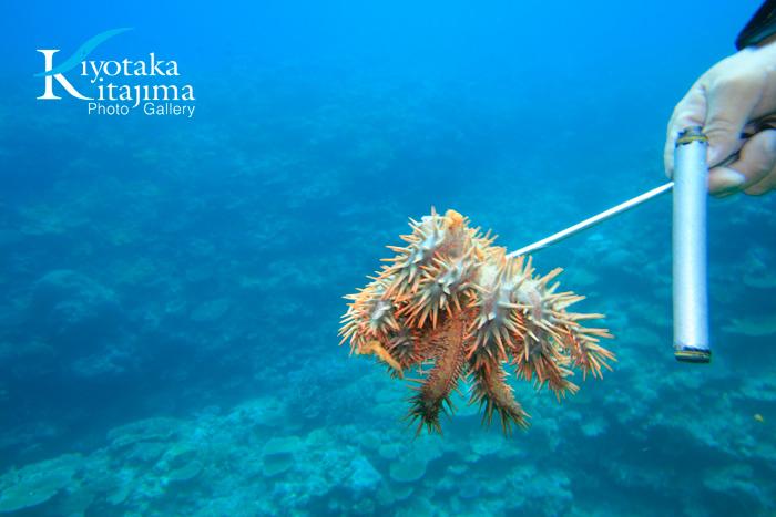 珊瑚礁を食べる生き物