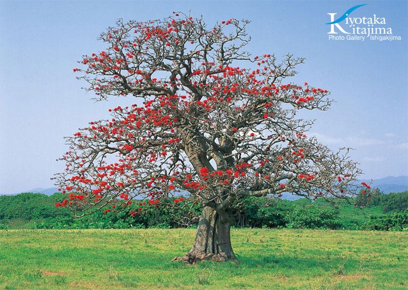 2011沖縄島旅カレンダー 3月