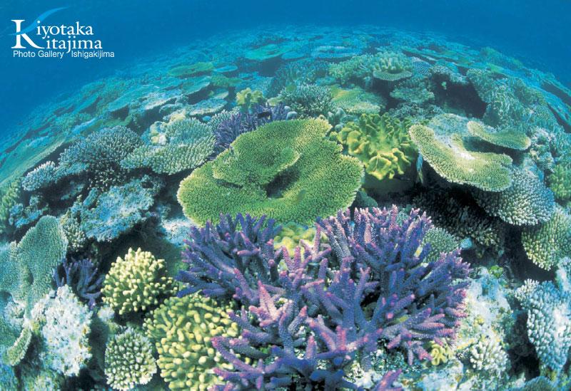 2011やすらぎの沖縄カレンダー4月