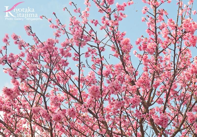 海 写真 桜
