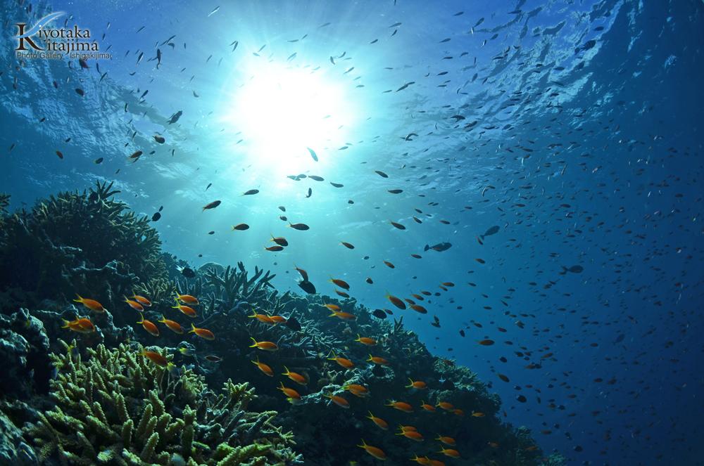 海 写真 西表島ダイビング