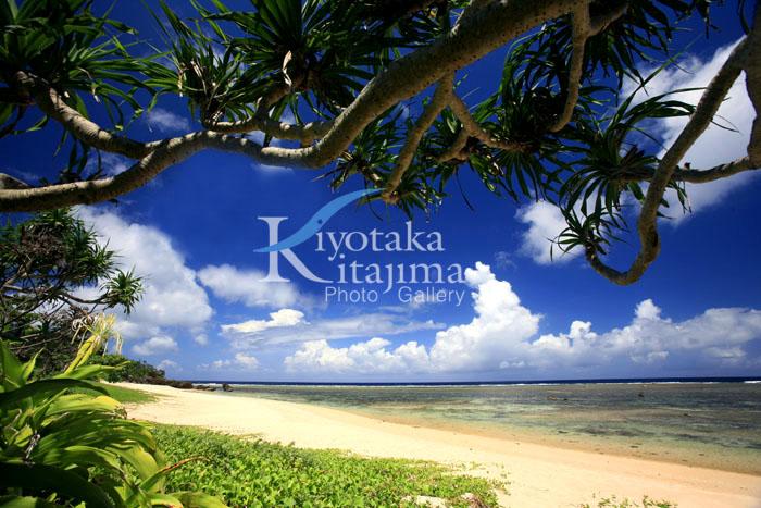 やまねこ島の秘密のビーチ