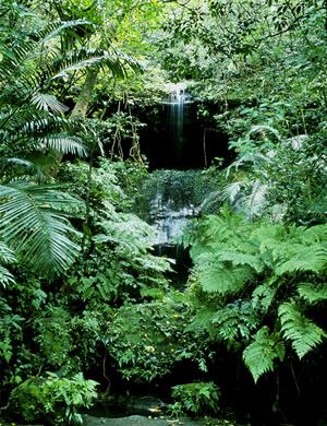 西表ジャングル2