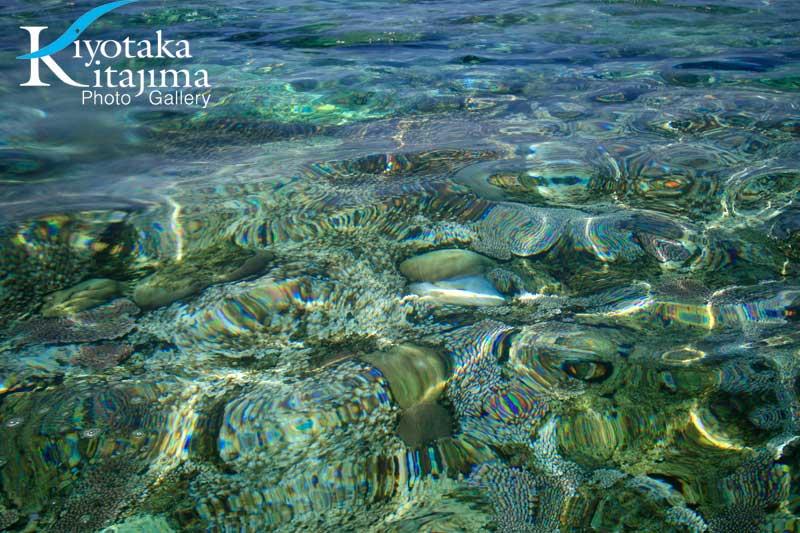 珊瑚の白化