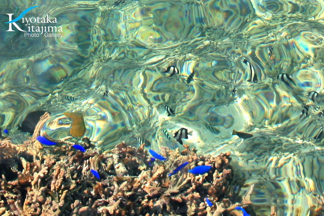 魚がみる太陽2