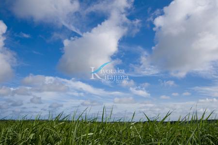 001石垣島:さとうきび畑