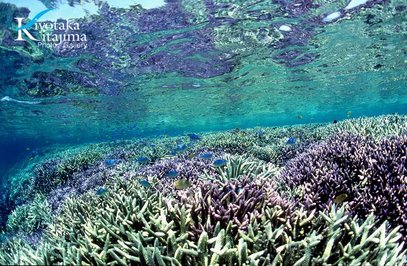 002宮古島:aqualium