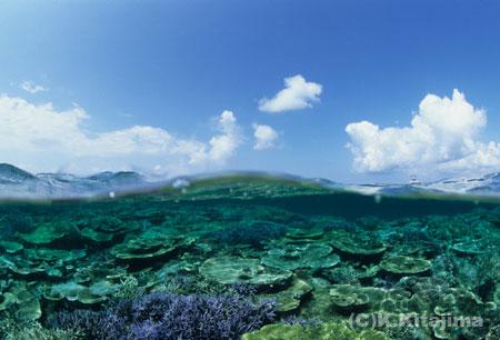 040新城島:半水面