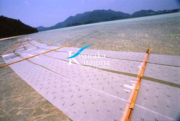 石垣島:布さらし