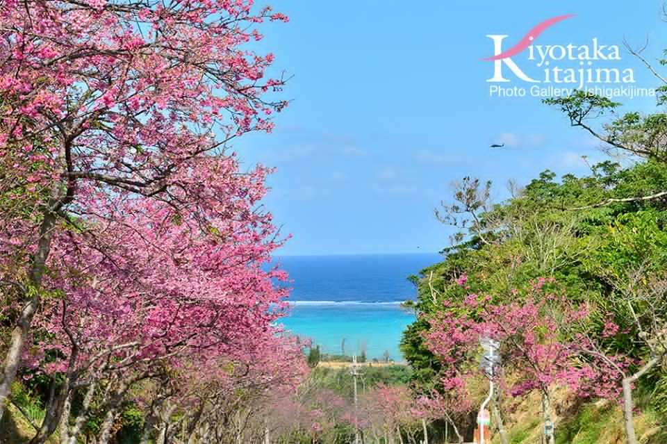 沖縄本島:今帰仁城跡