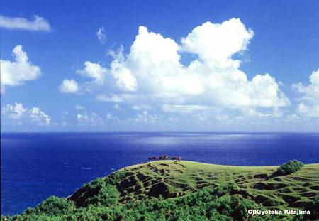 緑の丘とヨナグニウマと入道雲