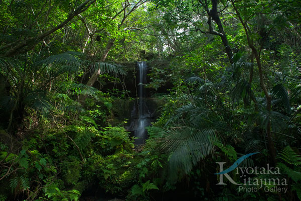 西表島:Jungle