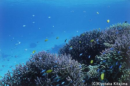 水中写真:海の宝石