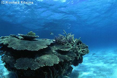 003サンゴ:海のオブジェ