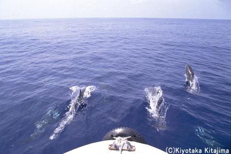 008魚の群れ:Go ahead