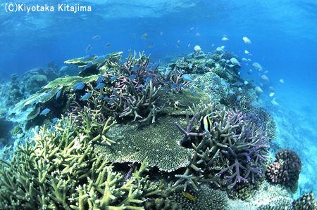 003サンゴ:aquarium