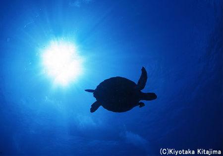 002水中写真:Flying