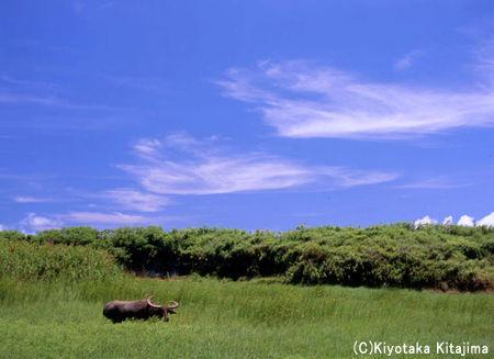 003小浜島:Wild life