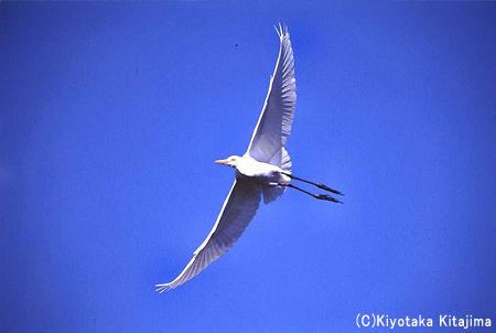 008鳥:Bird
