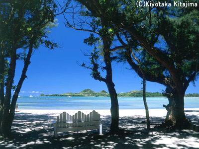 003ビーチ:木陰