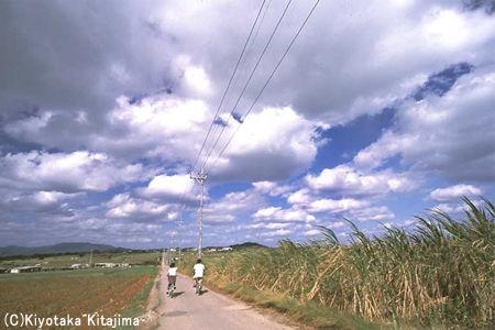 003小浜島:シュガーロード