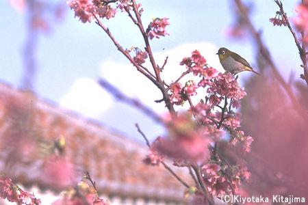 小浜島:春の沖縄