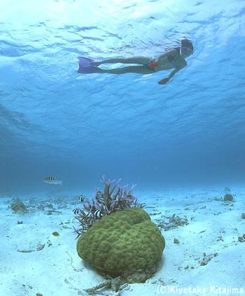 002水中写真:Oasis