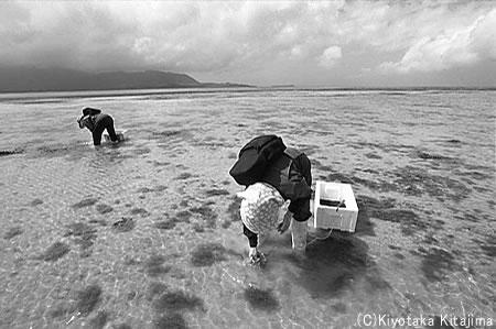 小浜島:浜下り