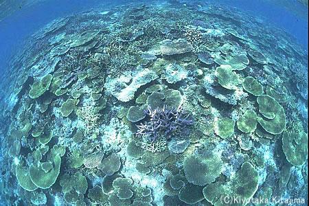 003サンゴ:coral garden