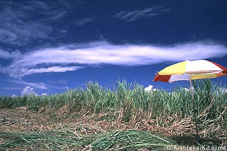 003小浜島:キビの夏植え