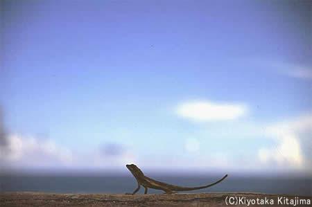 007陸の生物:黄昏のトカゲ