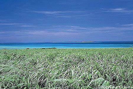 003小浜島:風の島