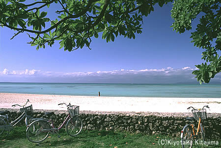 003ビーチ:コンドイビーチ