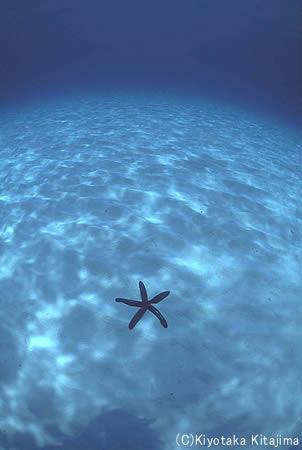 002水中写真:地球のへそ