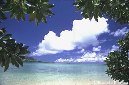 003ビーチ:モンパの木