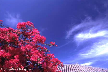 006花:うりずんの季節