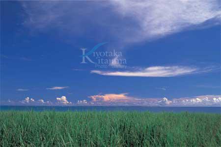 小浜島:ウージ畑と雲