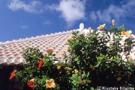 竹富島:赤瓦と花々