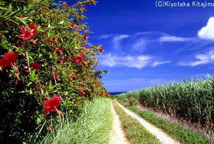 石垣島:あかばなの道