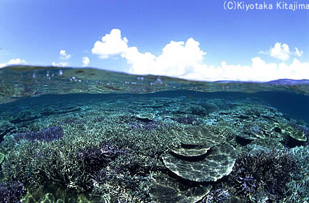 003サンゴ:Coral Garden2