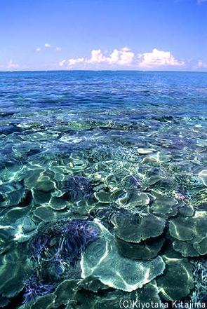003サンゴ:coral reef