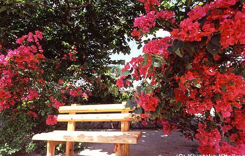 花:Flower bench