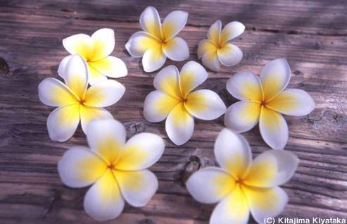 006花:flowers
