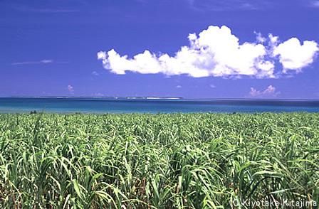 003小浜島:夏至南風
