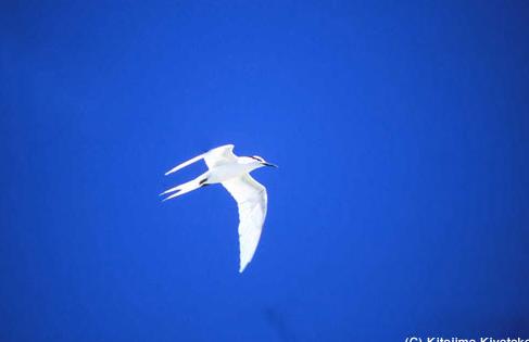 008鳥:in the sky