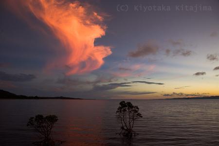 マングローブと夕焼け空
