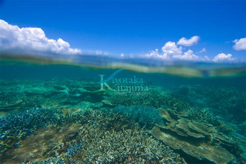 002水中写真:珊瑚の森2