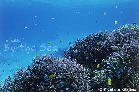 002水中写真:海の宝石2