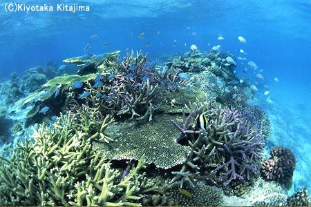 水中写真:aquarium